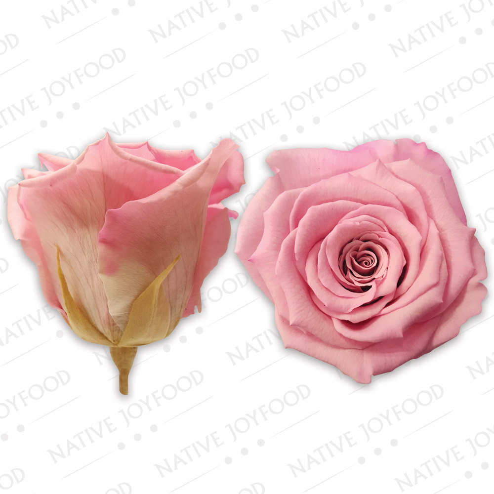 Rosa Ecuador Stabilizzata Extra-Large Rosa BC7+
